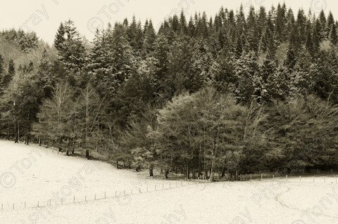 TGM-1029 GlendingWood 