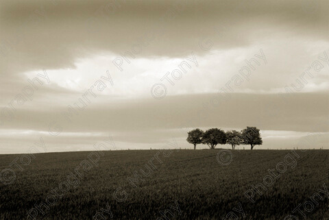 TGM-0004 FamilyTree2-12x8 